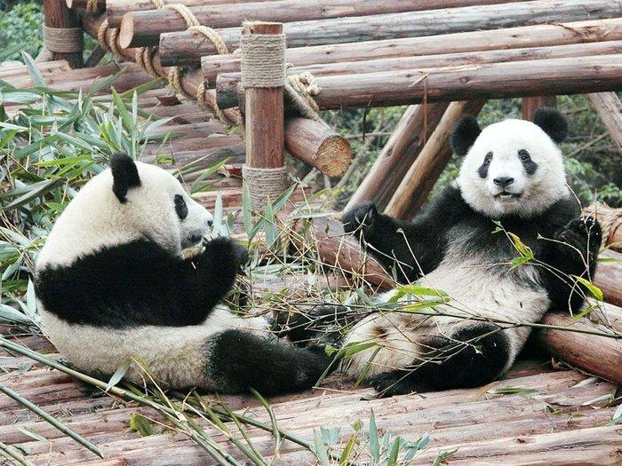 Заповедник для панд