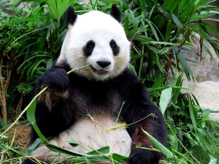 Бамбук на обед