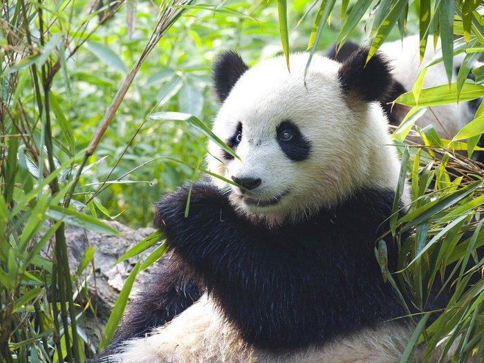 В бамбуковых зарослях