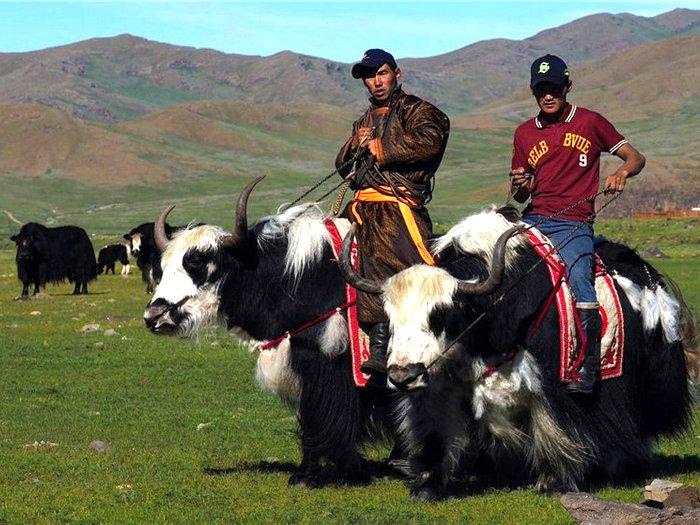 Пастухи на яках