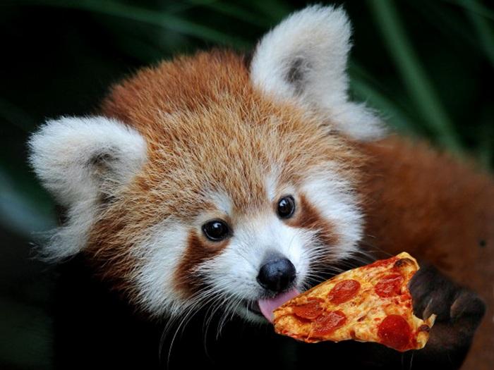 Пицца для панды