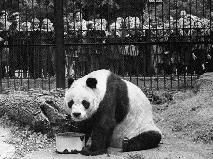 Панда Пинь Пинь