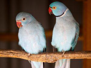 Попугаи острова