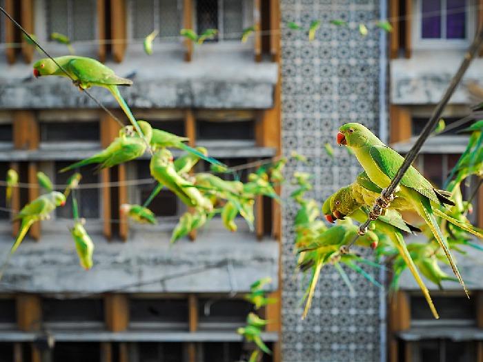 Попугаи в городе