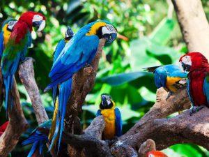 Попугаи в Перу