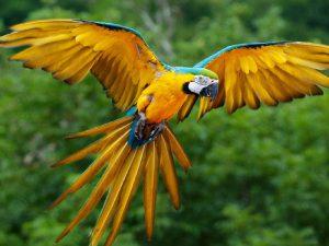 Попугай в воздухе