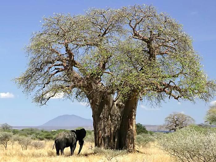 Приют для слона