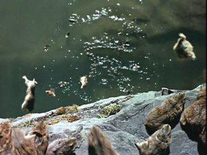 Прыгающие в воду