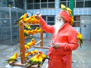 Птичий доктор