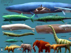 Размеры синего кита