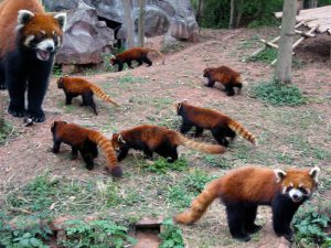 Детский сад для панды