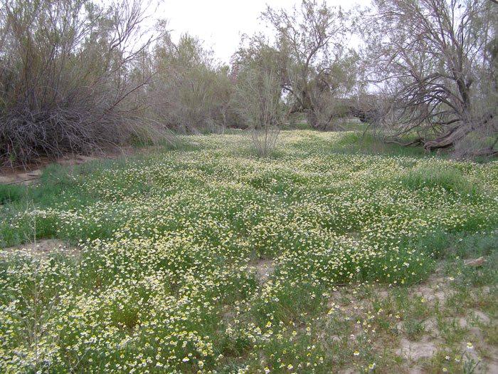 Весна в пустыне