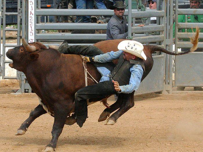 Скачки на диком быке