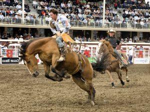 Лошадь понесла