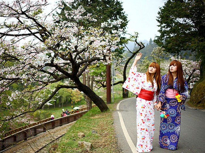 Цветущая сакура начало весны