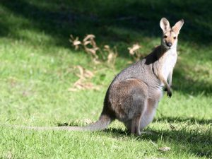Животные Австралии фото