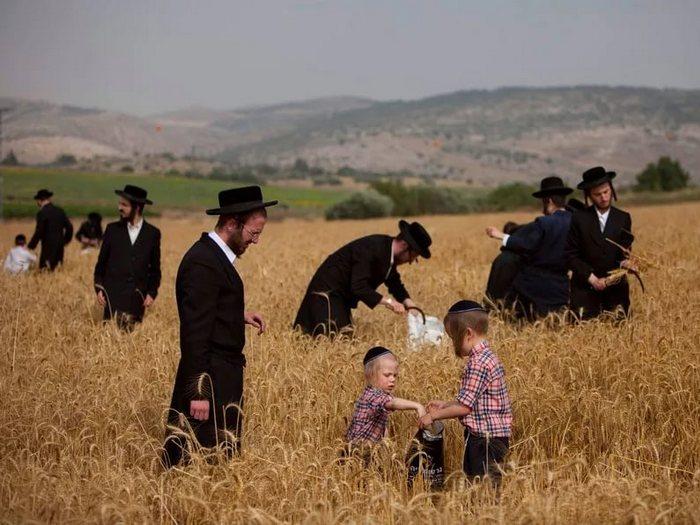 Интересные факты про Шавуот. 10 фактов о празднике Шавуот