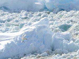 Снега Антарктиды