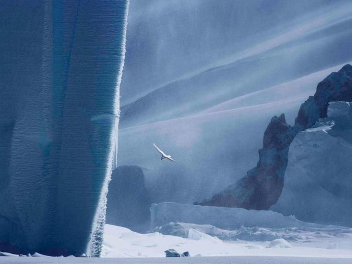 Среди айсбергов