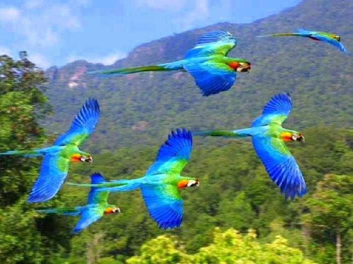 Стая попугаев