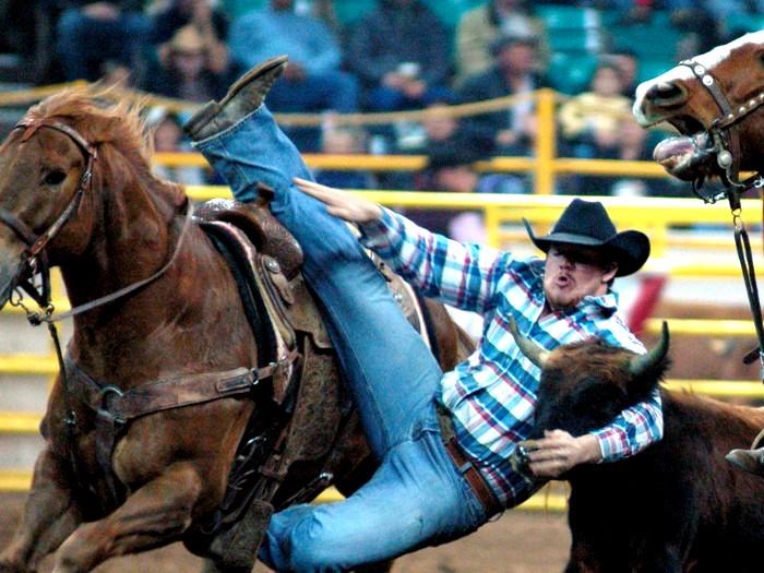 Steer Wrestling -  поимка бычка с лошади