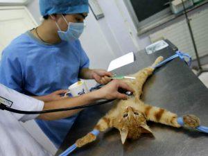 Зачем нужна стерилизация домашних животных