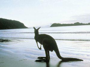 Сумерки на берегу