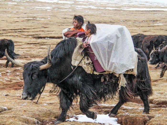 Тибетские кочевники