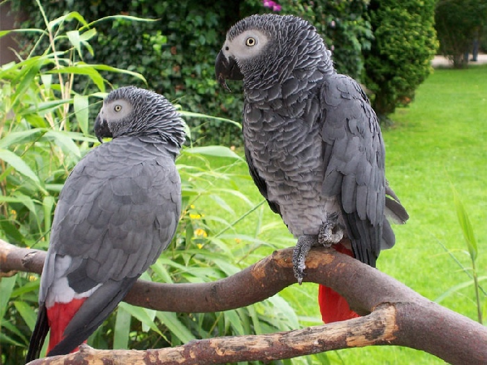 Тропическая птица
