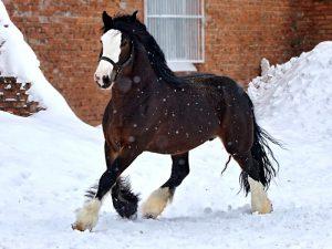 Тренировка лошадей