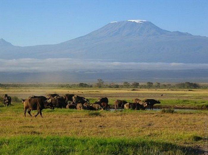 У подножия Килиманджаро