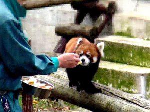 Яблоки на десерт