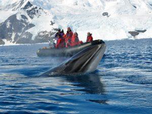 В Антарктиде