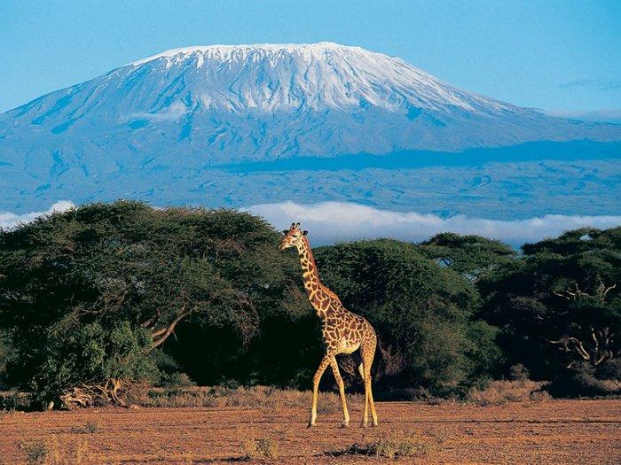 В парке  Килиманджаро