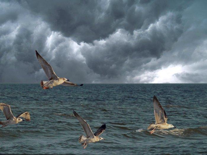 В предвестие бури