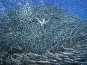 В рыбной стае