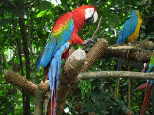 В Сингапурском зоопарке