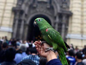 Виды попугаев. Описание и образ жизни различных попугаев