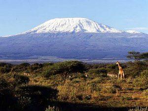 Вид на Килиманджаро