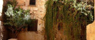Неопалимая купина - растение. Икона Купина Неопалимая