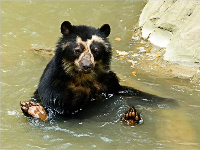 Медвежья баня