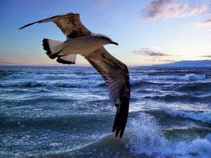 Волны касаясь