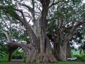 Вот это дерево