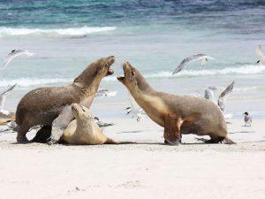 Животные острова Кегуру