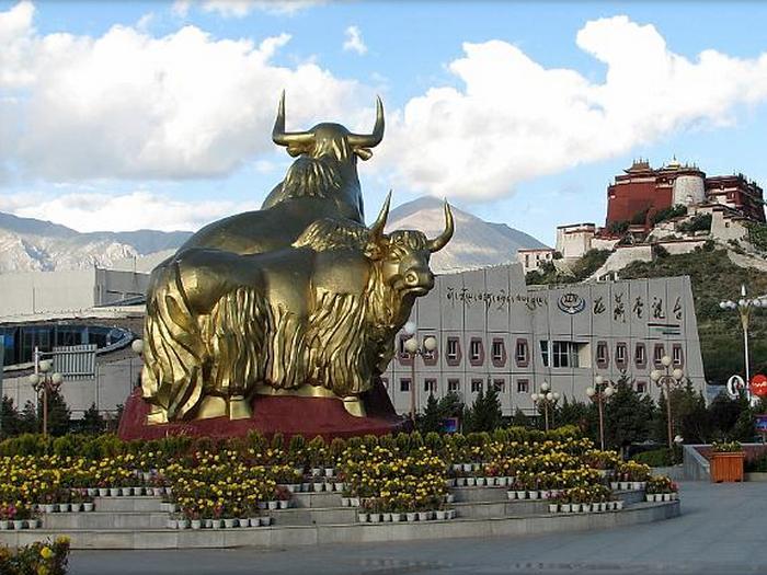 Золотые яки в Лхасе
