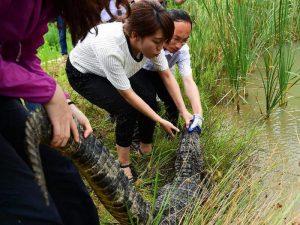 Заповедник аллигаторов в Китае