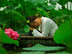 Лотос во Вьетнаме фото