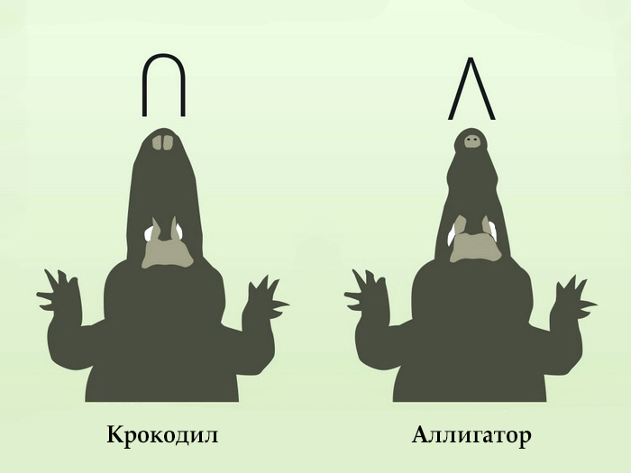 Отличия в форме челюстей