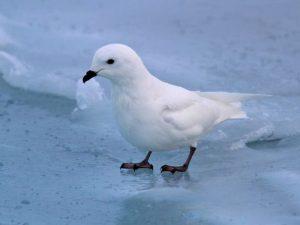 Белее снега
