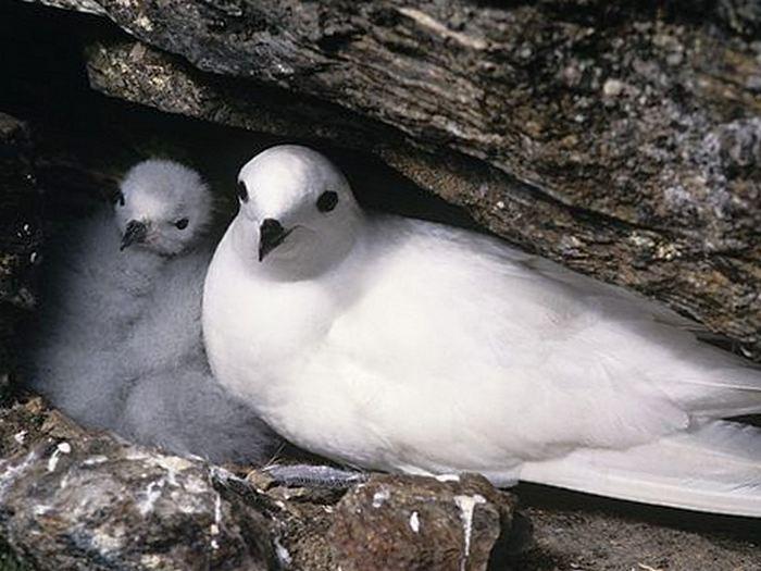 Гнездо в скале